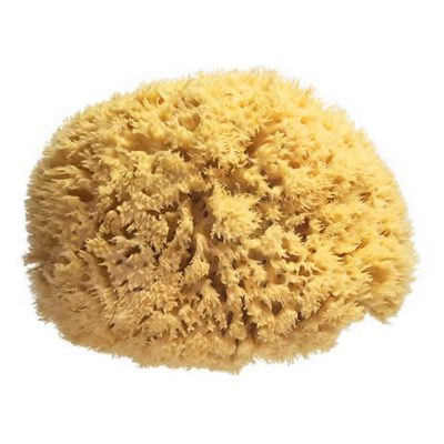 ספוג רחצה טבעי – Natural Sea Sponges
